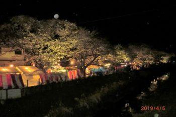一色・百合が丘の葛川沿いの夜桜ライトアップ